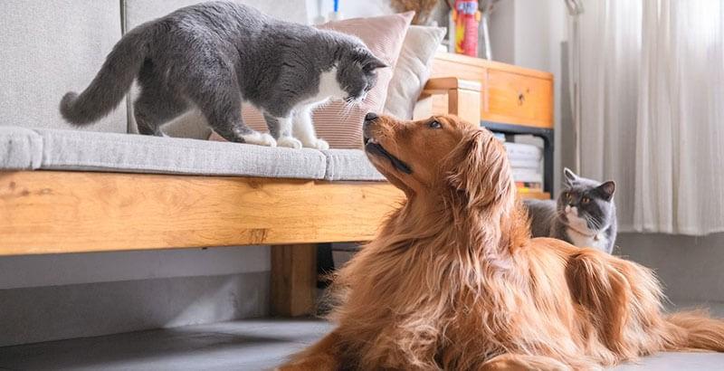 La Phytothérapie pour les animaux