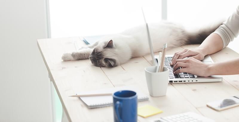 Vrai ou Faux : Les chats en appartement ne sont pas heureux