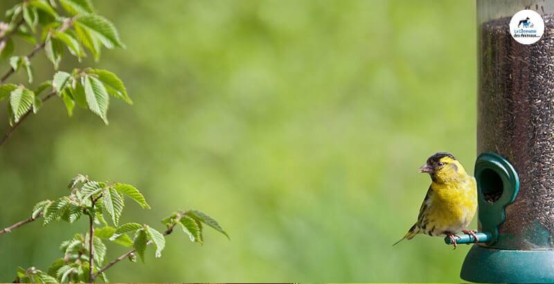 Quelle mangeoire choisir pour les oiseaux de son jardin ?