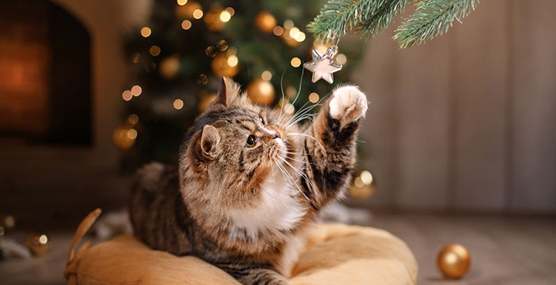 Quels sont les dangers de Noël pour votre chien ou votre chat ?