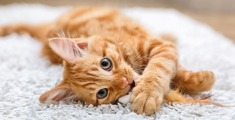 Pourquoi les chats éternuent-ils ?