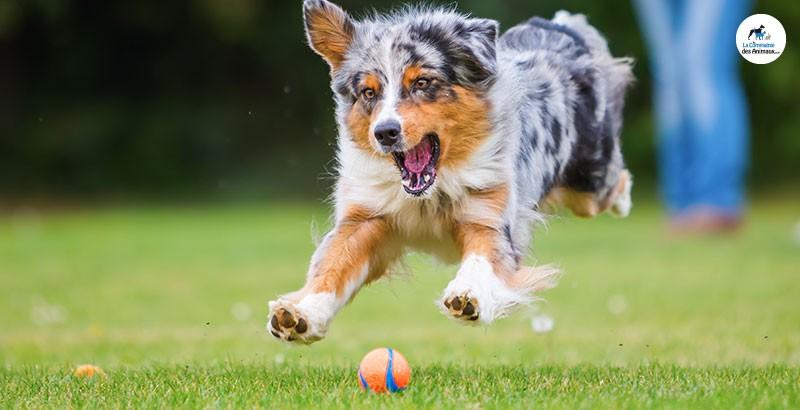 Les jouets lumineux pour chiens
