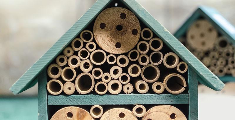 Focus sur les hôtels pour insectes
