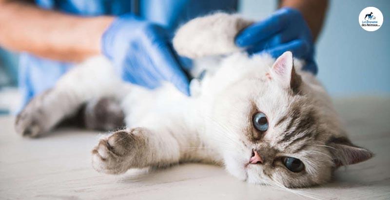 Que faire si mon chat à la diarrhée ?