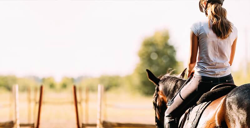Le stress chez le cheval