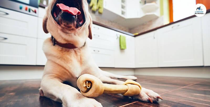 Quel os à mâcher pour mon chien ?