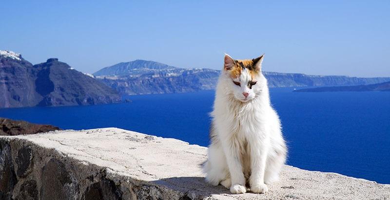 Dans quel cas utiliser la crème solaire pour mon chat ?