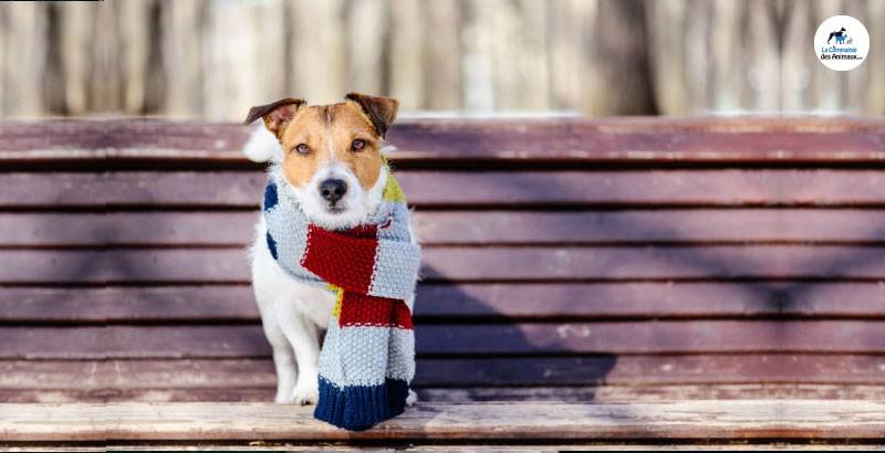 Faut-il mettre un manteau à son chien en hiver ?