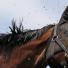 Comment éloigner les mouches et autres insectes de mon cheval ?