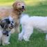 Les vermifuges naturels pour chiens sont-ils réellement efficaces ?
