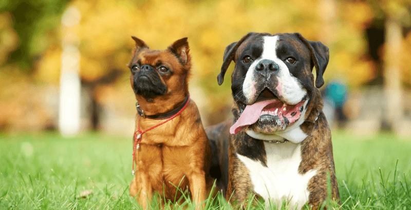 Guide d'achat des colliers antiparasitaires pour chien