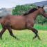Quels sont les bienfaits de l'huile de Lin pour les chevaux ?