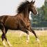 Comment muscler son cheval de la bonne manière ?