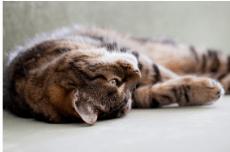 Quels sont les cas où votre chat a besoin de vitamines ? 