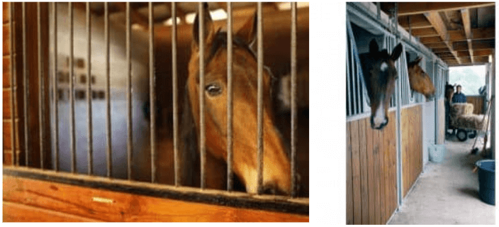Un exemple : préférer les grilles « col de cygne » (qui permettent au cheval de sortir la tête du box) aux grilles pleines qui enferment totalement le cheval dans le box.