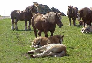 Repos chevaux