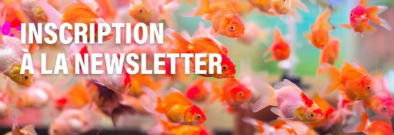Dogteur - Newsletter
