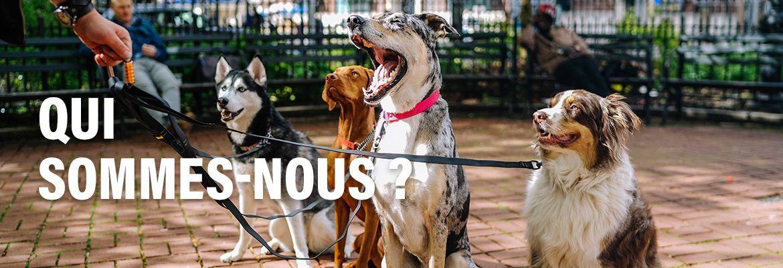 Dogteur - Qui sommes-nous ?