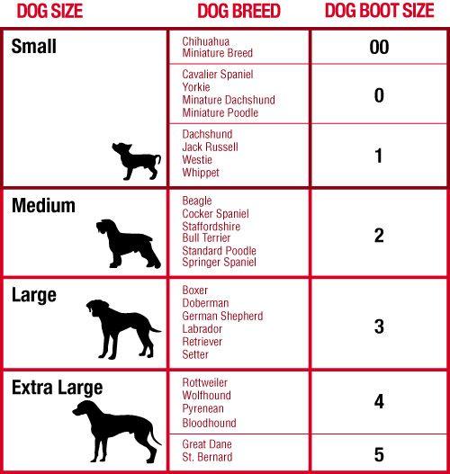Bottes pour chien de protection