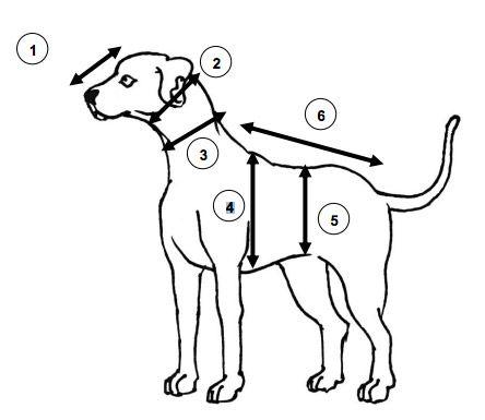Prendre les mensurations d'un chien
