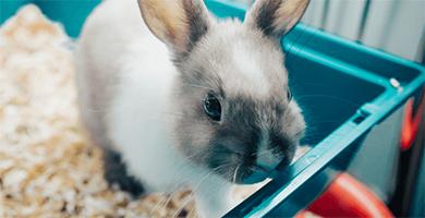 Quelle litière choisir pour mon lapin ?