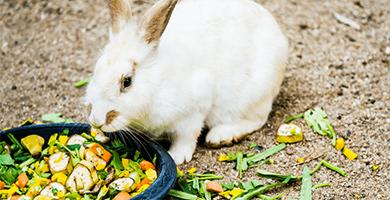 Quels légumes faut-il donner à son lapin ?